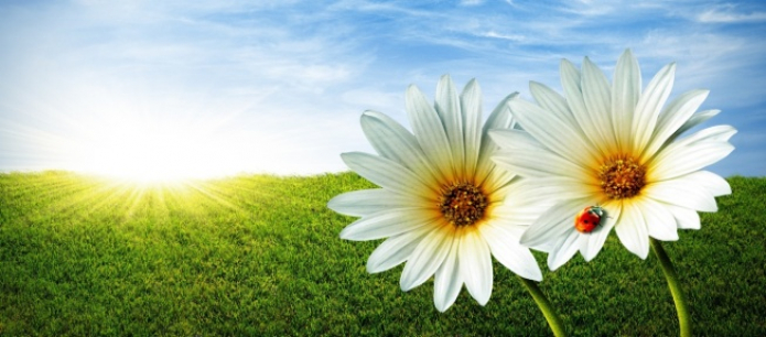 Role of Flowers and Plants in Bereavement